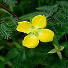 wild flower... by Wieslaw Jan Syposz