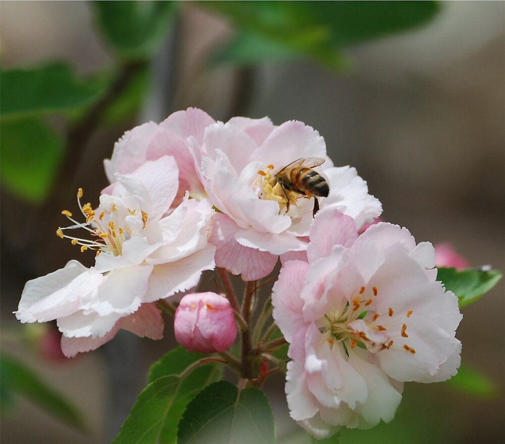 Bee by Princessbren2006