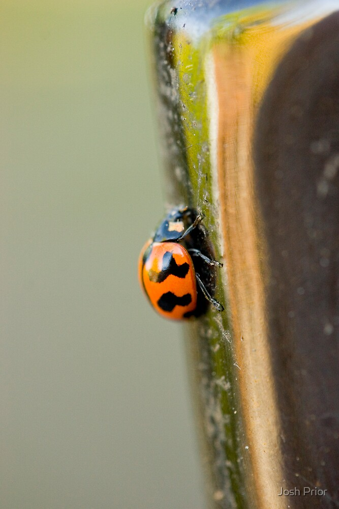 Lady Bug - Lady Bug Fly Away by Josh Prior