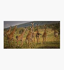 Giraffes on the Run Photographic Print