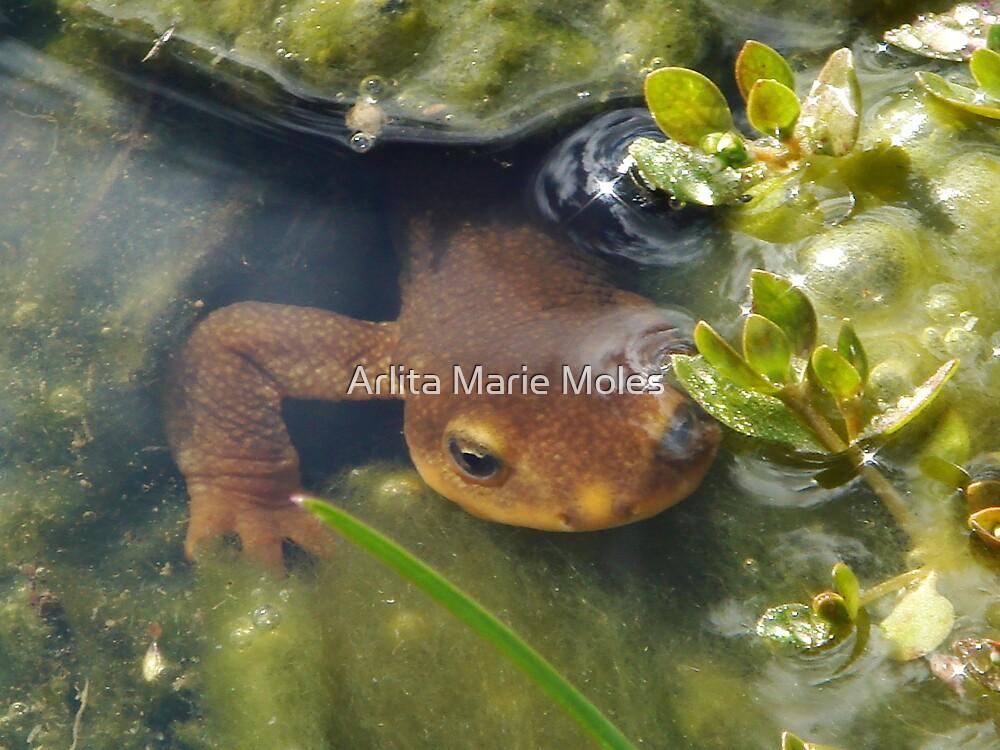 Creatures of Spring by Arlita Marie Moles