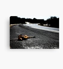 Road Kill. Canvas Print