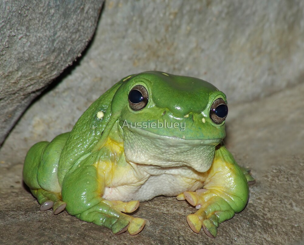 Green Tree Frog by Aussiebluey