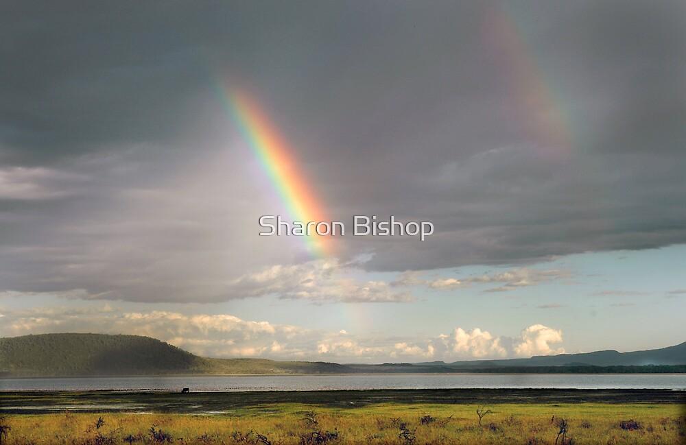 Lake Nakuru rainbow by Sharon Bishop