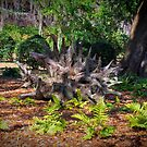 ROOTS OF A TREE by TJ Baccari Photography