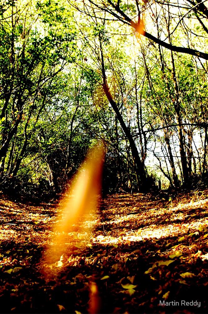 Autumn by Martin Reddy