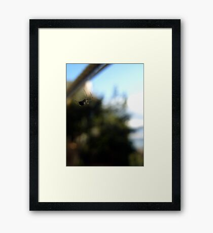 Floating spider Framed Print