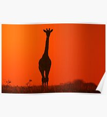 Giraffe Silhouette - Simplistic Nature and Colorful Freedom Poster