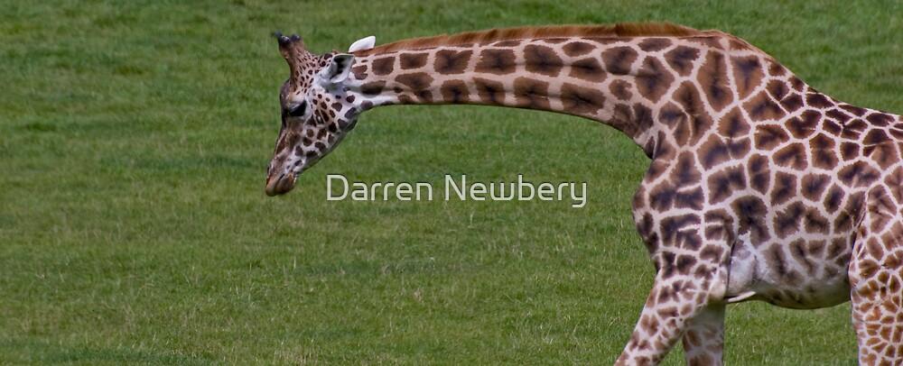 Wide Screen Giraffe by Darren Newbery