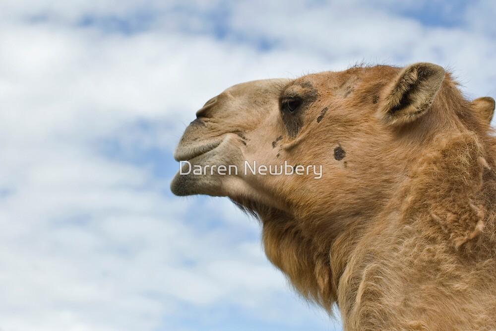 Longleat Camel by Darren Newbery