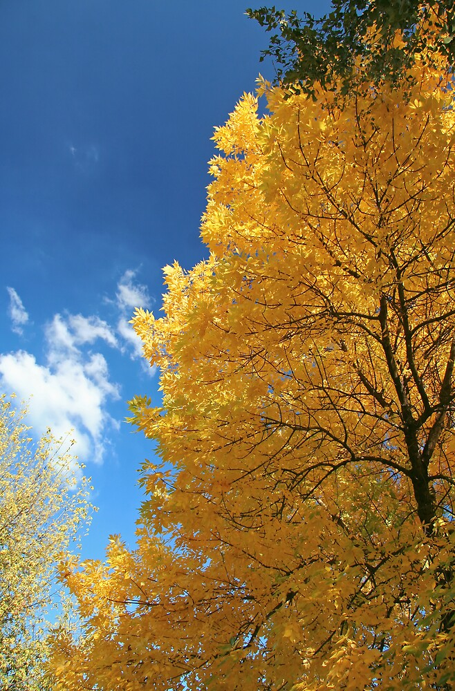 Autumn by GabiB