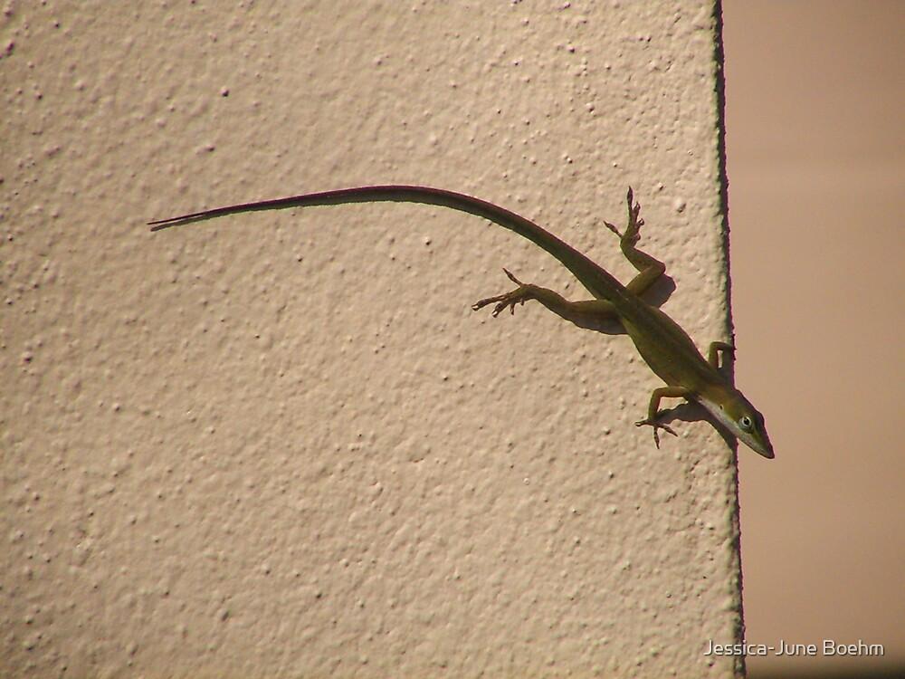 Little Lizard by Jessica-June Boehm