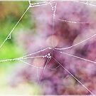 Spiderweb In The Mist by Susie Peek
