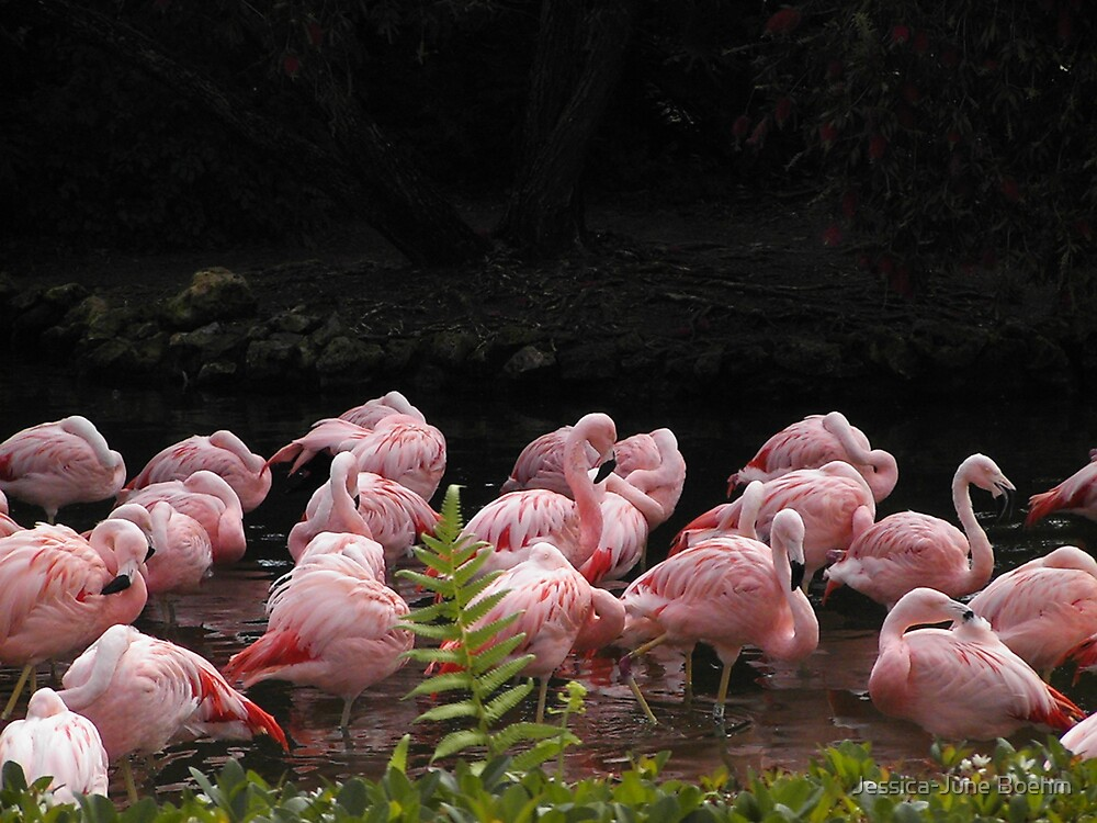 A Sea Of Pink by Jessica-June Boehm