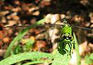 Green Dragon by Chelsea Kerwath