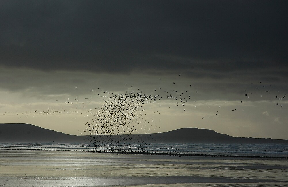 Flock of birds - Pembrey, Wales by Biscuitboss