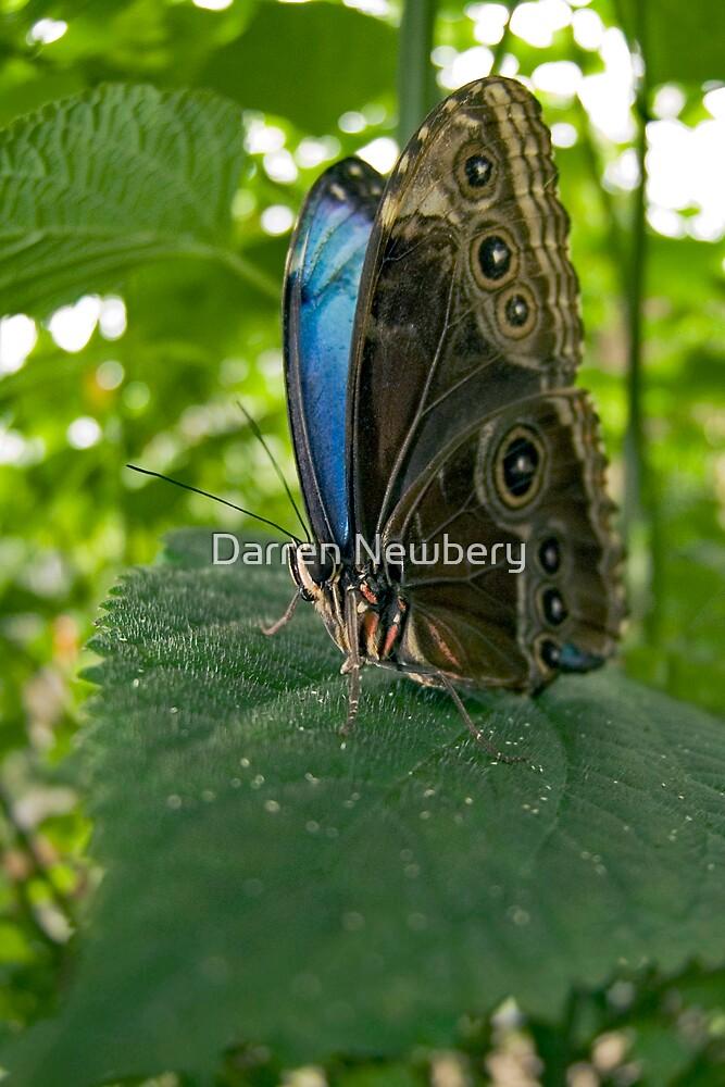Fisheye Butterfly by Darren Newbery