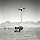 Horse and Hawk - Nr Dadl, Mongolia by Biscuitboss