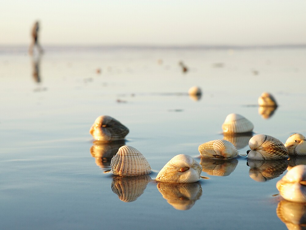 Shells - Pembrey, Wales by Biscuitboss