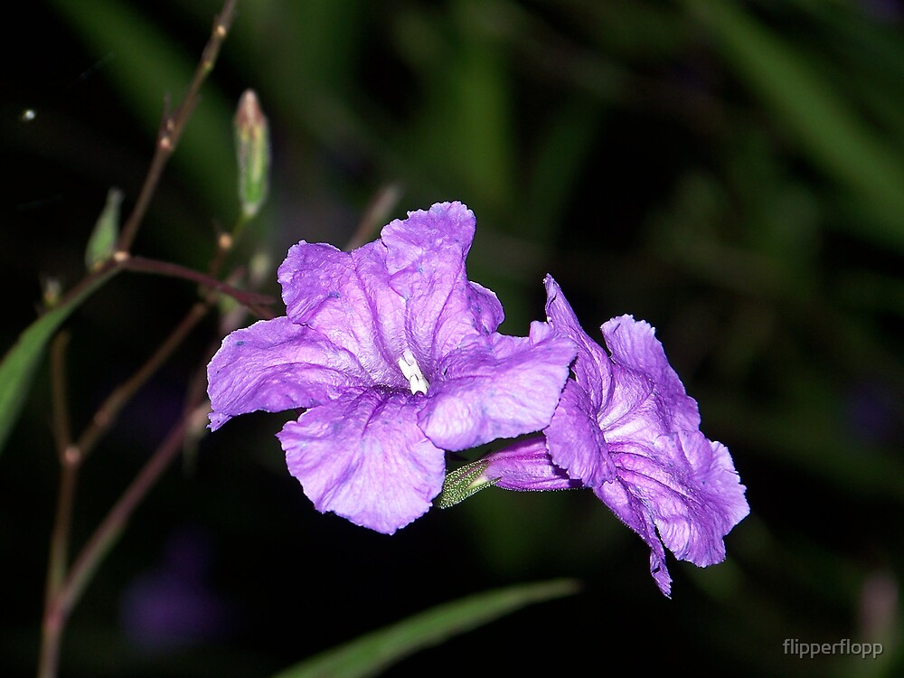 purple beauty at dark by flipperflopp