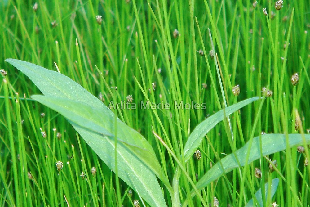Green Grass of Home by Arlita Marie Moles