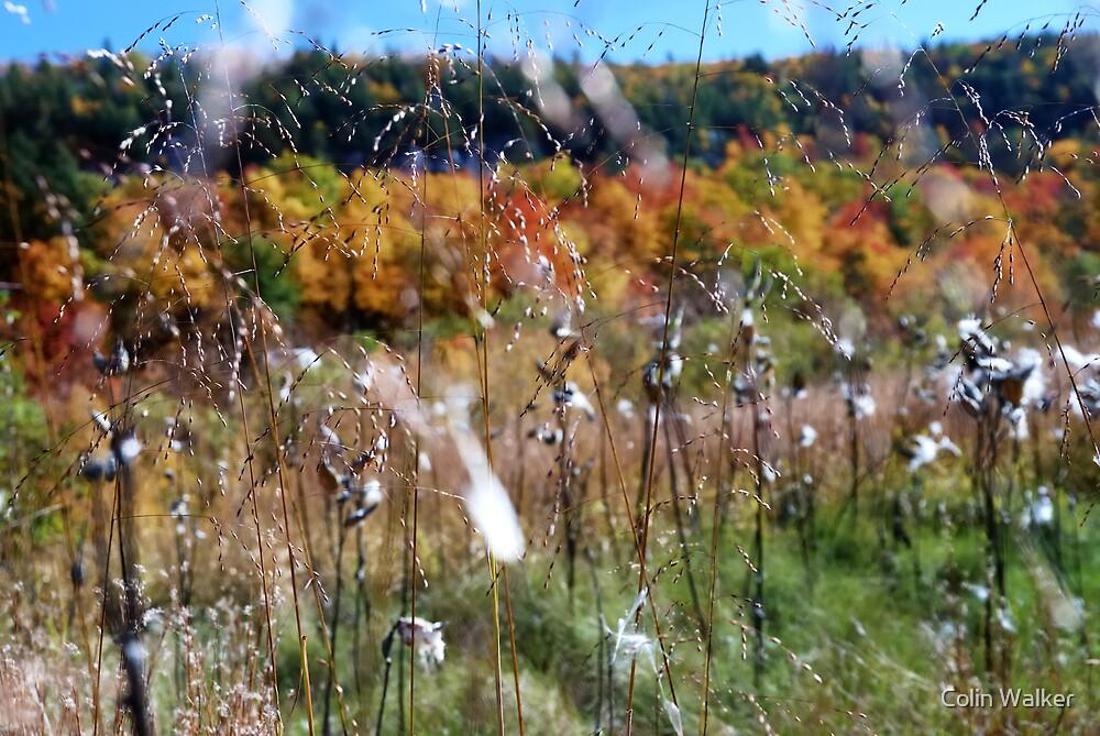 Grass by Colin Walker