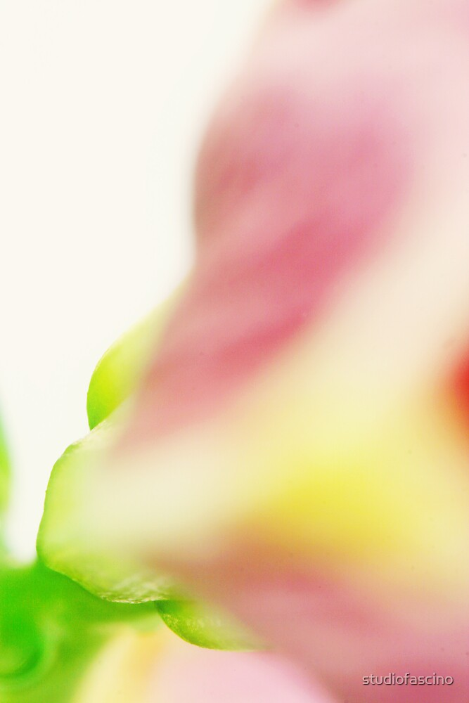color abstract by studiofascino