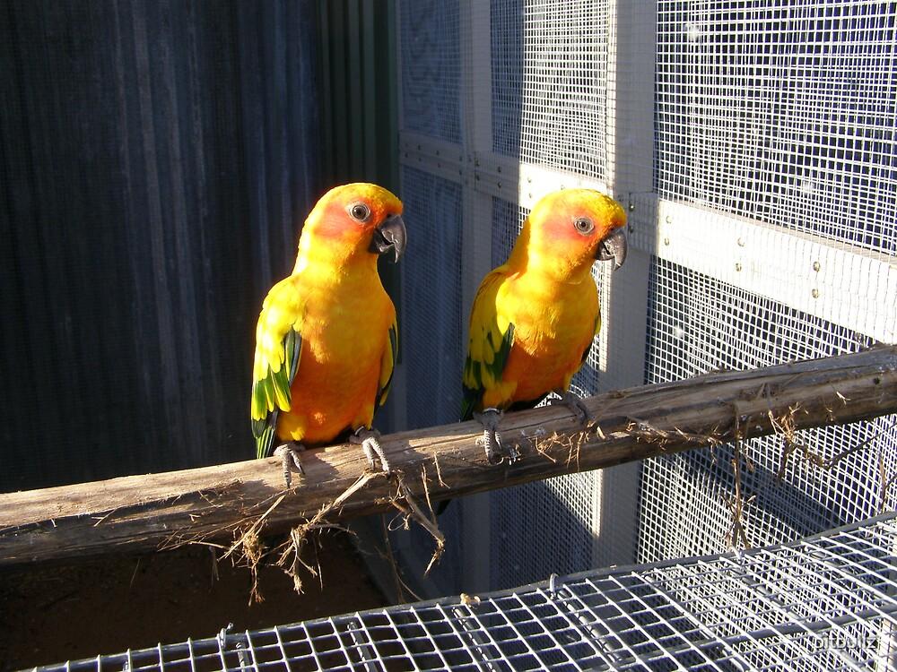 ''sun birds'' by pitbullz