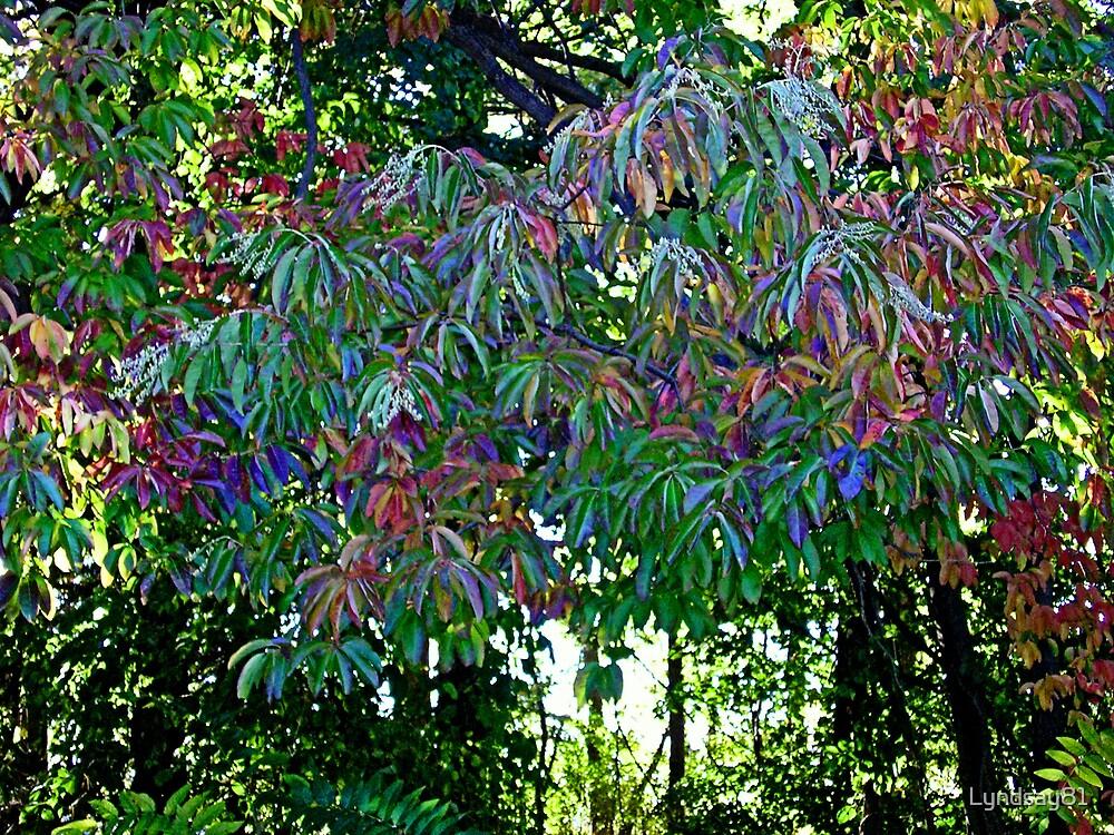 Vibrant Leaves by Lyndsay81