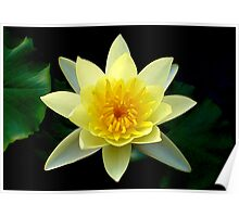 Yellow Lotus Poster