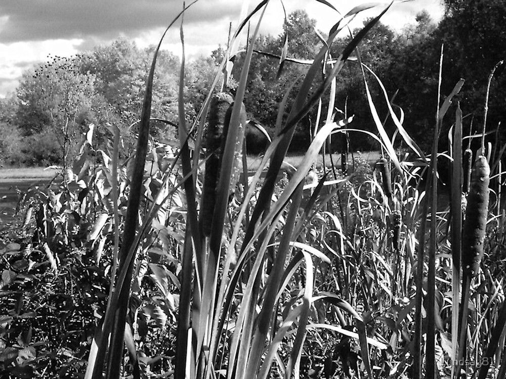 Cat tails by Lyndsay81