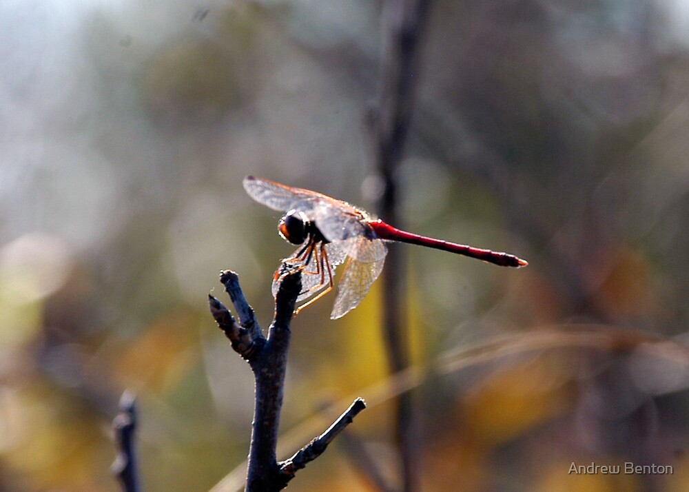 Dragonfly by Andrew Benton