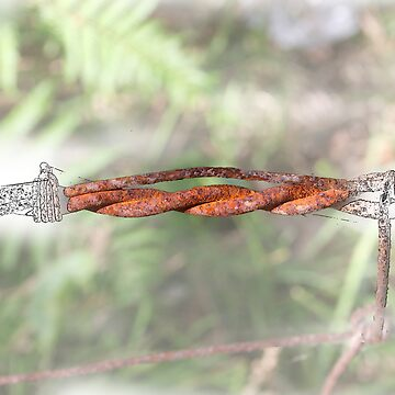 barbed wire by JasonRadich