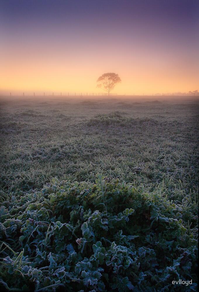 Frost by evlloyd