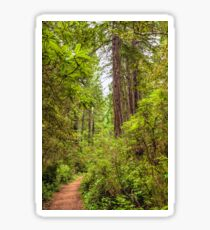 Redwoods Trail Sticker