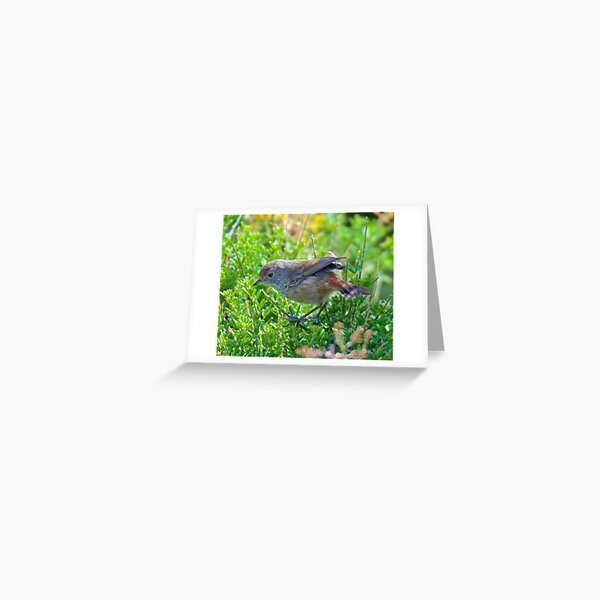 THORNBILL ~ Brown Thornbill D2wopCPA by David Irwin Greeting Card