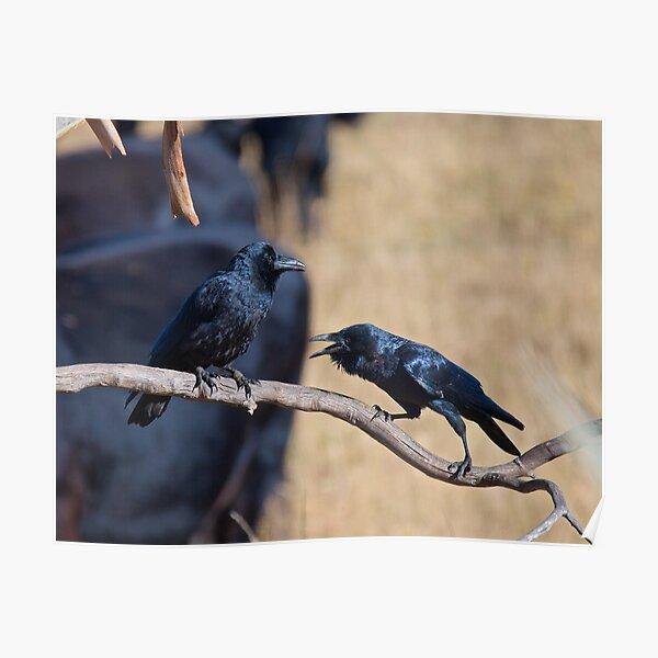 RAVEN ~ Forest Raven CYKPNTVR by David Irwin Poster