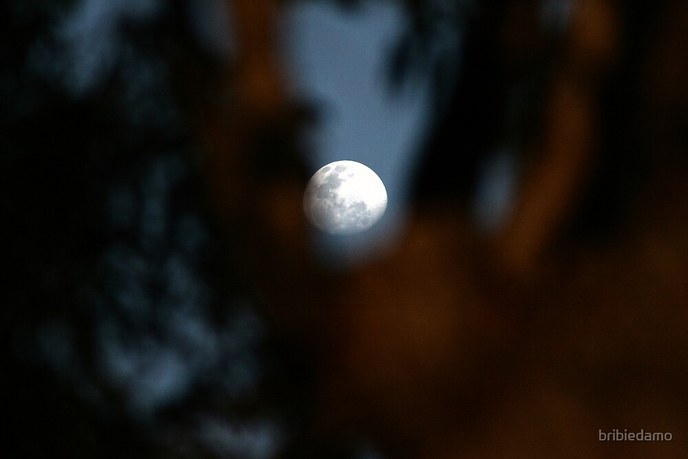moon thru the gums by bribiedamo