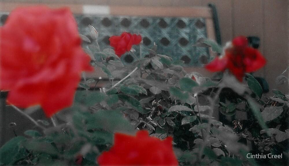 Roses-R-Red by Cinthia Creel