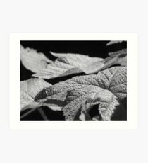 Soft Foilage Art Print