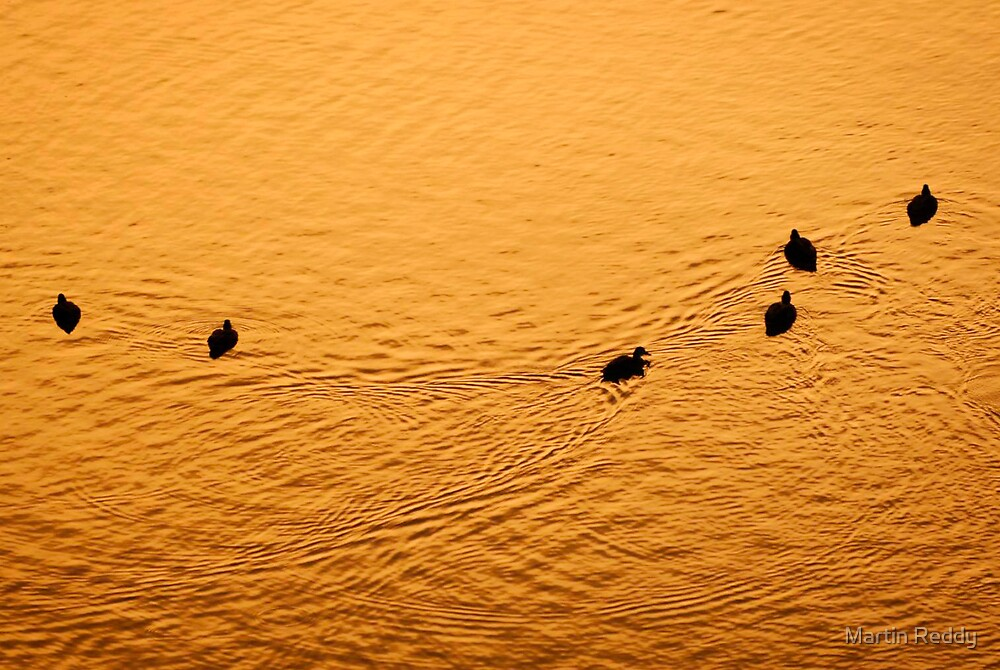A few ducks and some water by Martin Reddy