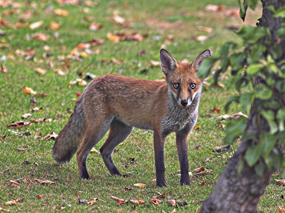 Muddy Fox Cub by kitlew