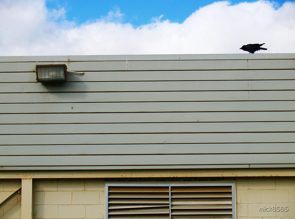 raven on roof by mick8585