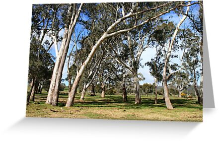 White Gums by Stephen Mitchell