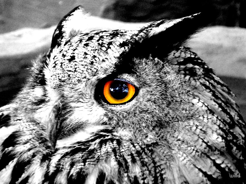 owl eye by willd