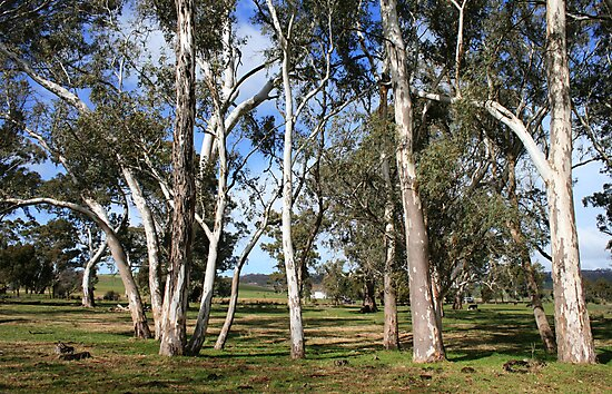 White Gums III by Stephen Mitchell