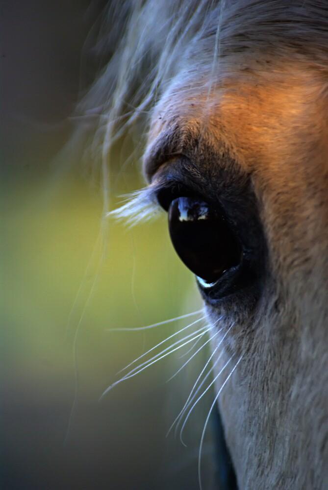 Horse close up by Robert Kiesskalt
