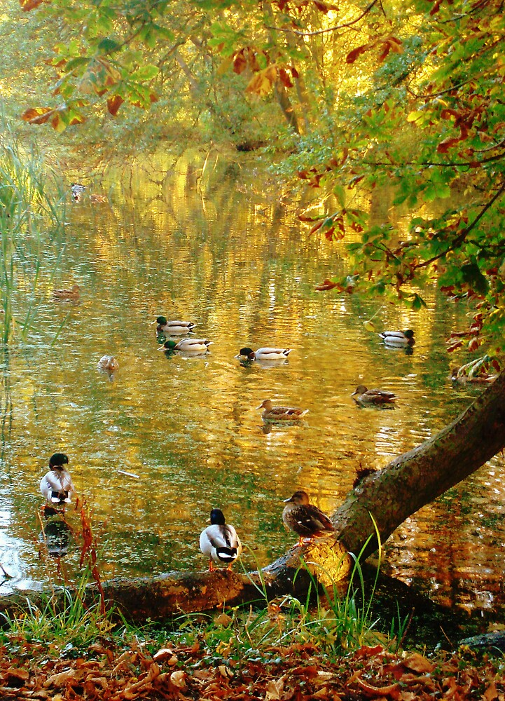 Chatting Ducks by Kate Towers IPA