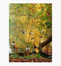 Chatting Ducks Photographic Print