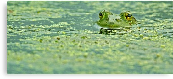 Algae by Mundy Hackett